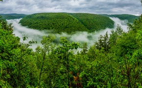 Picture forest, fog, gorge, PA, The Grand Canyon, Pennsylvania, The Grand canyon of Pennsylvania, Pine Creek ...