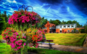 Picture grass, trees, flowers, bench, house, lawn, England, HDR, track, the bushes, Petunia, Bebington