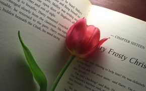Picture background, Tulip, book
