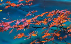Picture autumn, leaves, branch, China, Sichuan, Jiuzhaigou, Jiuzhaigou National Park, Valley of nine villages