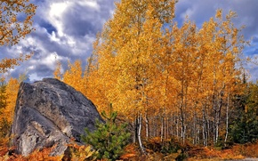 Picture autumn, forest, clouds, birch