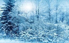 Wallpaper photo, winter, spruce, snow, nature