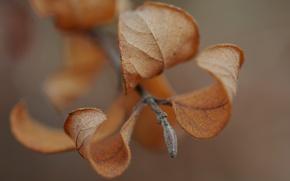 Picture autumn, leaves, macro, sprig, macro