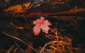 Picture autumn, forest, grass, sheet, needles