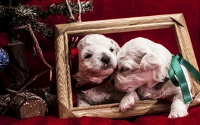 Picture animals, dogs, tape, holiday, new year, frame, puppies, pair, tree, bows, puppies