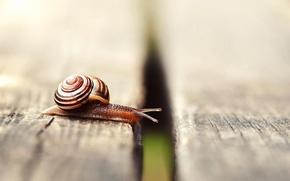 Picture macro, movement, Board, snail, Alena Romanovskaya