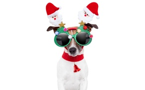 Picture animals, red, creative, holiday, new year, dog, white background, Santa Claus, Santa Claus, bell, tree, …