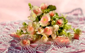 Picture photo, Flowers, Bouquet, Begonia