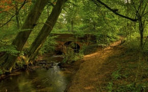 Picture forest, trees, bridge, river, arch