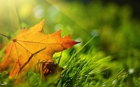 Wallpaper bokeh, sheet, grass, autumn