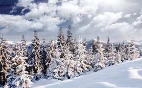 Picture winter, forest, the sun, snow, landscape, nature, tree