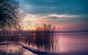 Picture the sky, the sun, sunset, lake, the reeds, pink, shore, silence, The evening, twilight, blue