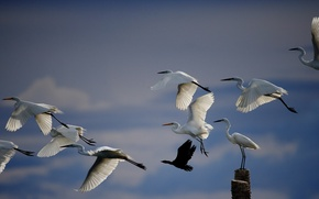 Picture the sky, birds, nature