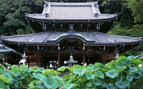 Wallpaper Forest, Temple, Japan
