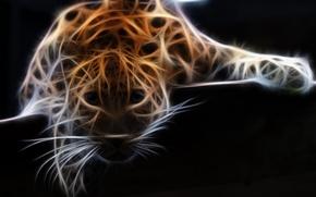 Picture photoshop, animal, Leopard