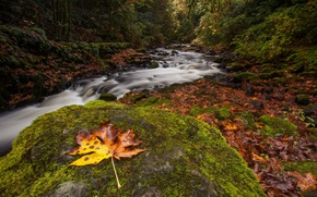 Picture autumn, forest, sheet, river, stone, moss, stream