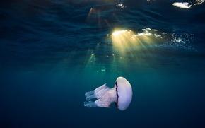Picture sea, light, Medusa