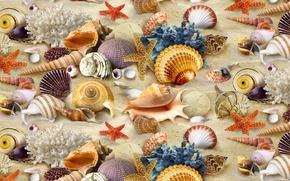 Picture texture, corals, shell, textures, background desktop, inhabitants ocean