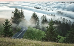 Picture road, trees, fog, morning