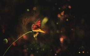 Picture flower, grass, butterfly, grass, flower, butterfly