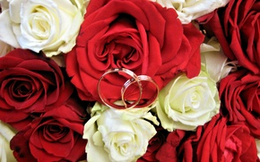 Picture roses, Flowers, ring