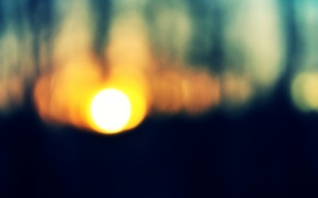 Picture the sun, trees, forest, sunset