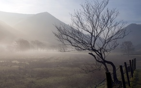 Picture field, landscape, nature, fog, tree, the fence, morning