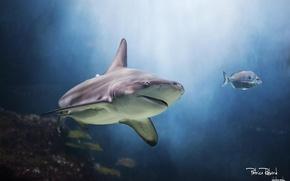 Picture aquarium, shark, underwater world, water Park