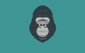 Wallpaper minimalism, head, monkey, gorilla, monkey, gorilla
