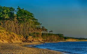 Picture sand, sea, beach, trees, shore, Germany, Mecklenburg-Vorpommern