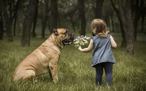 Picture nature, dog, girl