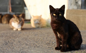 Picture cat, cat, look, cats, black, street, port