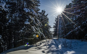 Picture the sun, snow, trail, Forest, tree