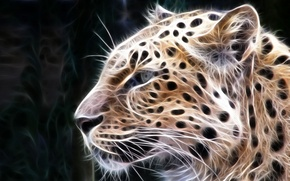 Wallpaper leopard, treatment, predator, cats