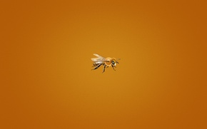 Picture bee, minimalism, orange background, small, bee, bee