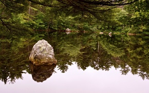 Picture forest, water, trees, pond, river, stones, nature, rivers, reflection., vater
