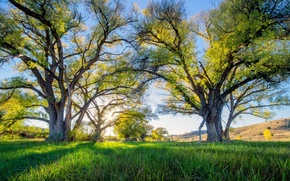 Picture the sky, trees, meadow