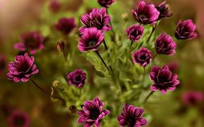 Picture flowers, treatment, bokeh, Dina Telhami, Closings