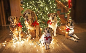 Picture dogs, holiday, tree