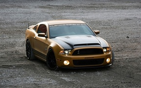 Picture Shelby, Ford Mustang, cars, auto, GT640, Golden Snake