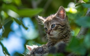 Picture kitty, on the tree, bokeh