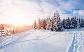 Picture Nature, Winter, The fence, Snow, Forest, Spruce