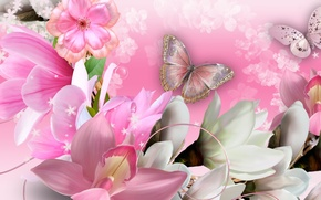 Wallpaper butterfly, collage, petals, orchids, flowers