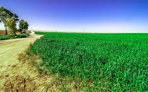 Picture greens, field, grass, nature, green, track, grass, Nature, field, landscape, path