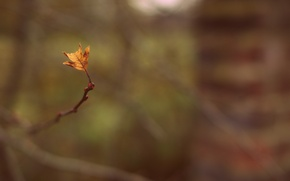 Picture widescreen, leaf, blur, HD wallpapers, Wallpaper, leaf, sprig, full screen, background, fullscreen, macro, branch, widescreen, ...