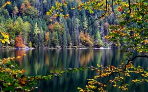 Picture autumn, forest, leaves, trees, river, branch, slope