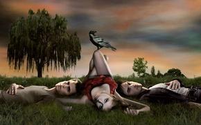 Wallpaper tree, grass, rook, three, the vampire diaries