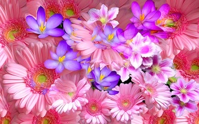 Picture line, rendering, paint, petals, Krokus, gerbera