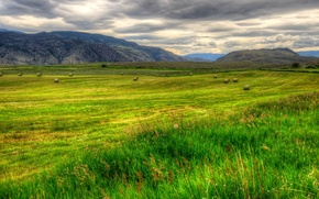 Wallpaper grass, landscape, nature, field, HDR, Canada, British, Columbia