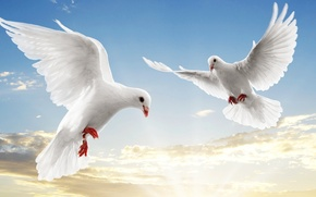Picture the sky, pigeons, white, soar